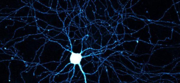 Neuron-690x320