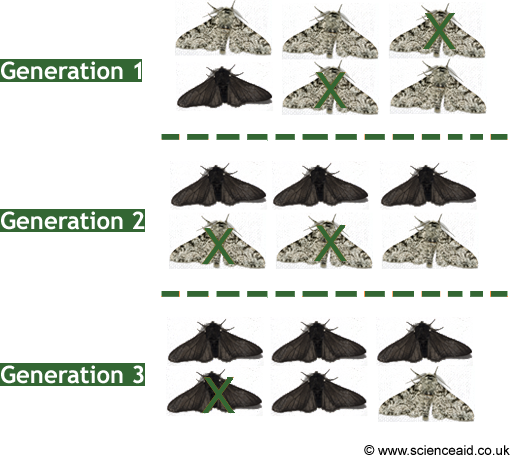 mothevolution